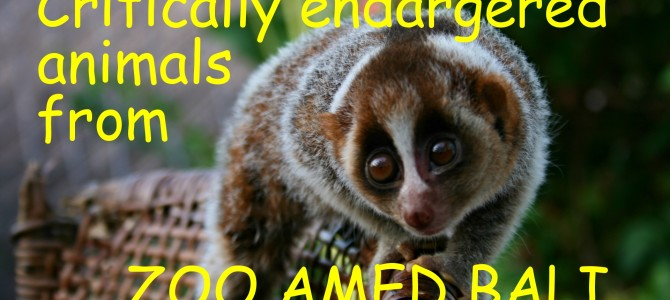 ZOO Amed Bali Critically Endargered animals in Selang